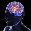 Brain actiivyt copy